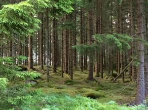 Wald Wald Wald