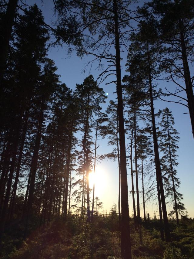 Wald bei Roasjö