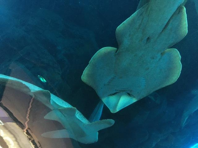 Haie im Underwater Zoo