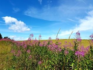 Schottische Landschaft in der Moray Speyside